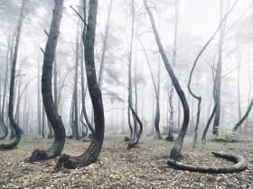扭曲的森林