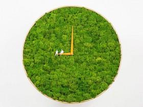 荷兰绿色青苔钟