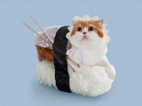日本寿司猫:Sushi Cats